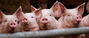Gründe für die vegane Lebensweise<br /> Teil 1: Tierrechte